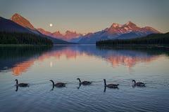 Un canard en caoutchouc rouge aboutit une ligne des canards jaunes photos libres de droits