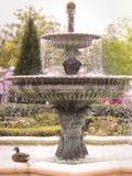 Un canard par la fontaine Image libre de droits