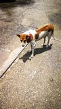 Un cane è parco all'aperto dell'Asia Fotografie Stock