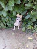 Un cane Fotografia Stock Libera da Diritti