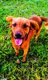 Un cane immagini stock libere da diritti