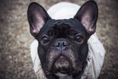 Un cane Immagini Stock