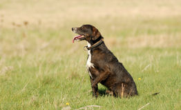 Un cane Fotografie Stock Libere da Diritti