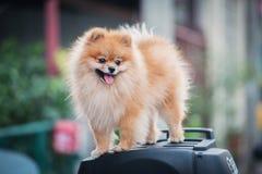 Un cane Fotografia Stock