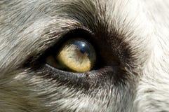 Un cane abbandonato Fotografie Stock