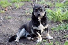 Un cane allegro su una passeggiata fotografie stock libere da diritti
