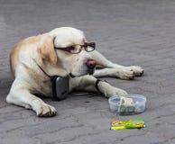 Un cane astuto nella vecchiaia è diventato malato per vedere ed ha avuto bisogno dei vetri fotografia stock libera da diritti