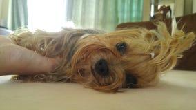 Un cane che aspetta per giocare con me Fotografia Stock