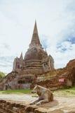 Un cane che custodice tempio tailandese in Ayudhya, Tailandia Fotografia Stock