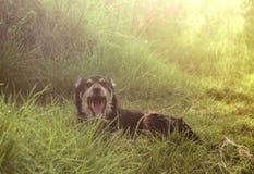 Un cane che dorme immagini stock