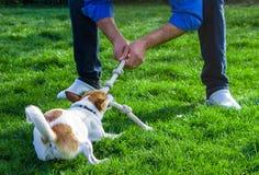 Un cane che gioca con il suo proprietario tirando una corda