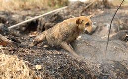 Un cane che gioca sulla terra Immagine Stock