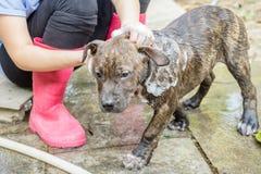 Un cane che prende una doccia Immagini Stock Libere da Diritti