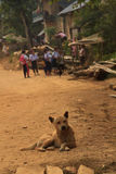Un cane che riposa nella via con un gruppo di scuola scherza nei precedenti nel Laos Fotografia Stock