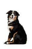 Un cane che si siede in su fotografie stock