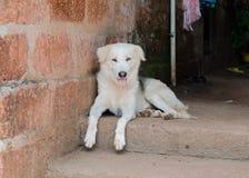 Un cane che si siede sul riposo della via Fotografia Stock Libera da Diritti
