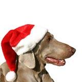 Un cane con il cappello 2 di natale Fotografia Stock