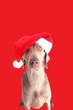 Un cane con il cappello 3 di natale Immagini Stock