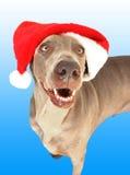 Un cane con il cappello di natale Fotografia Stock