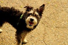 Un cane di animale domestico adorabile Fotografia Stock Libera da Diritti