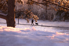 Un cane di camminata dell'uomo nel parco di inverno Immagini Stock