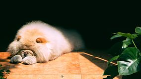 Un cane di sonno Immagine Stock