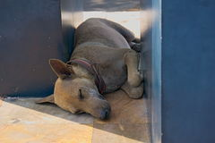 Un cane di sonno Immagine Stock Libera da Diritti