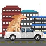 Un cane e un camion Fotografia Stock