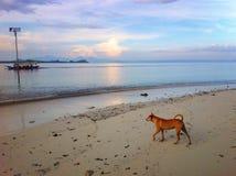 Un cane e una barca Fotografie Stock Libere da Diritti
