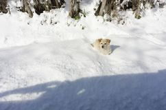 Un cane nella neve Fotografia Stock