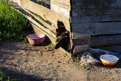 Un cane nella vecchia cabina si siede Immagini Stock Libere da Diritti