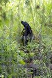 Un cane nero nel legno Immagine Stock