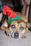 Un cane non è appena per il Natale Immagine Stock Libera da Diritti