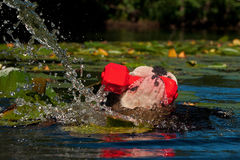 Un cane nuota con il suo giocattolo Fotografia Stock Libera da Diritti