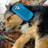 Un cane parla sul telefono Immagini Stock