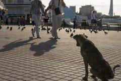 un cane randagio nel quadrato all'aperto immagine stock libera da diritti