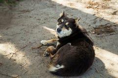 Un cane randagio sulla spiaggia Fotografia Stock Libera da Diritti