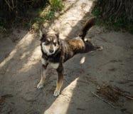 Un cane randagio sulla spiaggia Immagine Stock