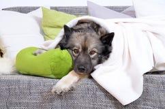 Un cane si siede su un grande sofà Immagine Stock Libera da Diritti
