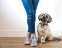 Un cane simile a pelliccia sveglio che si siede obbedientemente accanto al suo proprietario Fotografia Stock