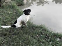 Un cane solo fotografia stock libera da diritti