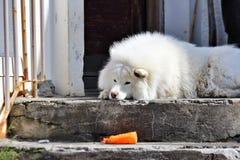 Un cane solo Fotografia Stock