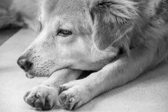 Un cane solo Immagine Stock