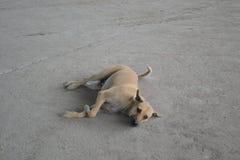 Un cane sta guardando Fotografie Stock Libere da Diritti