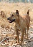 Un cane sta stando Immagini Stock