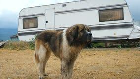 Un cane sta stando accanto ad un caravan video d archivio