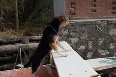 Un cane su una barca Fotografia Stock Libera da Diritti