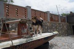 Un cane su una barca Immagini Stock
