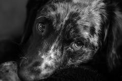 Un cane sveglio Immagine Stock