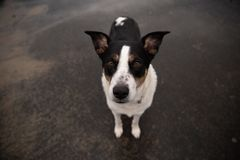 Un cane sveglio grazioso che esamina la macchina fotografica fotografia stock libera da diritti